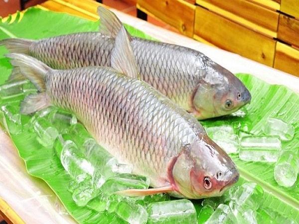 Mơ thấy cá trắm có điềm báo gì và đánh lô đề nào?