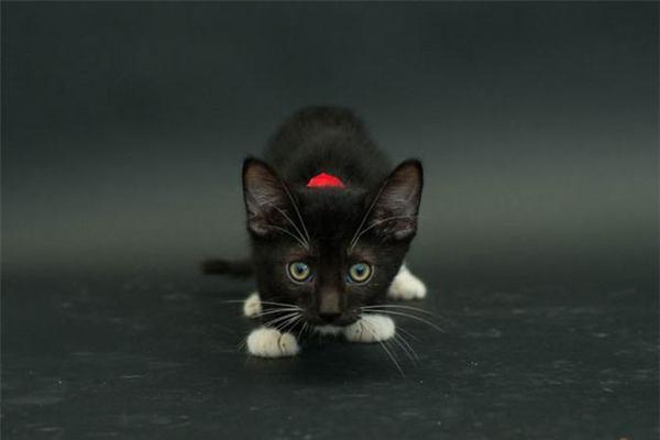Mơ thấy mèo đen có điềm báo gì và đánh con gì?