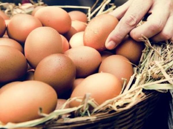 Mơ thấy trứng gà có điềm báo gì và đánh con số nào?