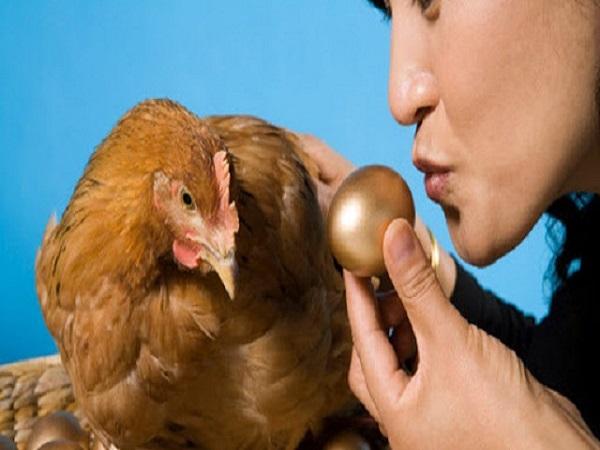 Mơ thấy gà đẻ trứng có điềm gì và đánh con số nào?