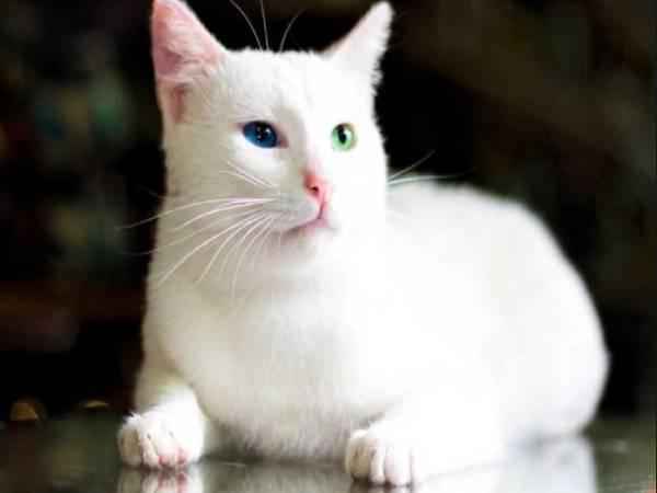 Mơ thấy mèo trắng đánh con gì và có điềm báo nào?